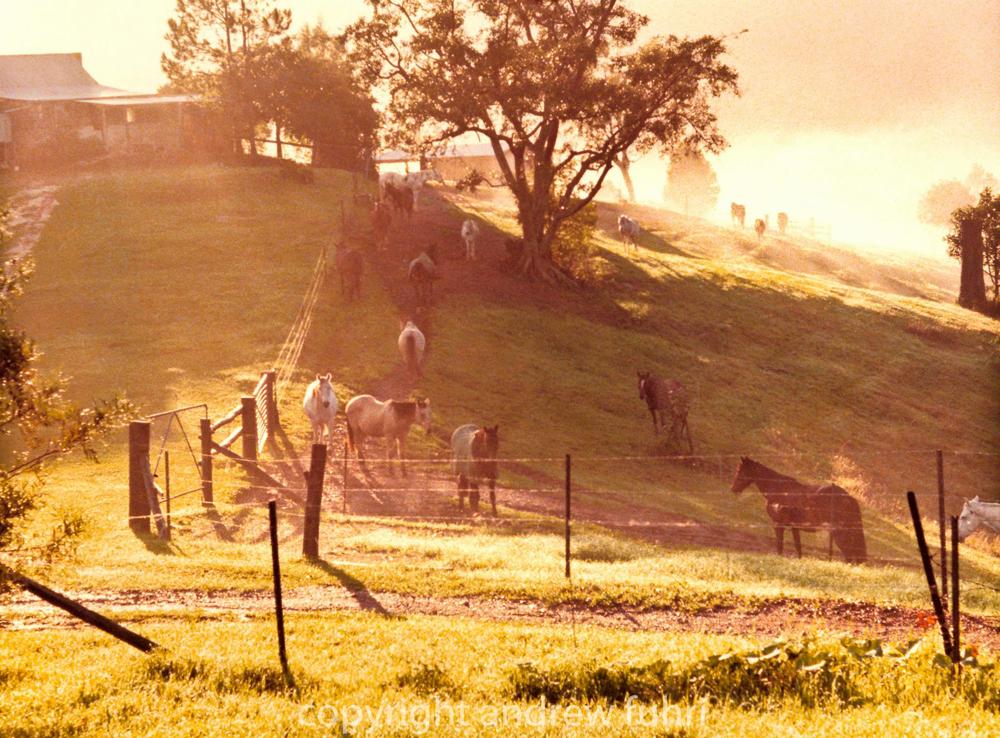 Australia Farm copyright Andrew Fuhri web